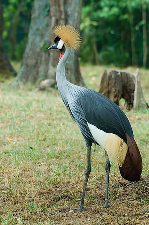 Nashville TN Zoo 2010