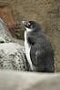 National Aviary in PIttsburgh