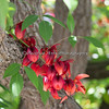 Stunning red cluster of flowers on a tree near the front of the Oakland Zoo
