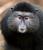 Omaha Zoo_080718_4799