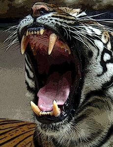 Tiger's Big Teeth