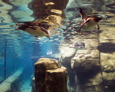 Underwater world of the penguins