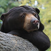 Henry Doorly Zoo - Bears :