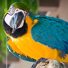 Henry Doorly Zoo - Birds & Butterflies :