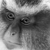 Henry Doorly Zoo - Primates :