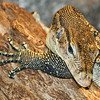 Henry Doorly Zoo - Reptiles :