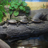 I have another picture of the same kind of turtles, but they were moving, so it didn't come out.