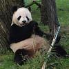 Tian eating, June 6, 2009.
