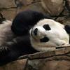 Mei sleeping, June 6, 2009