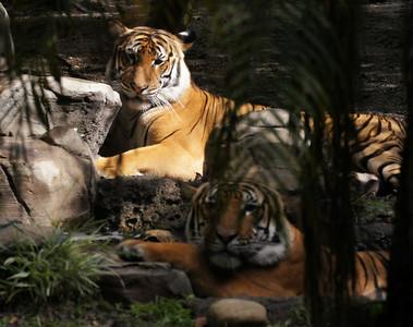 pb zoo 6 1 13