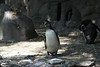 "<a href=""http://www.philadelphiazoo.org/zoo/Meet-Our-Animals/Birds/Penguins/Humboldt-Penguin.htm"">http://www.philadelphiazoo.org/zoo/Meet-Our-Animals/Birds/Penguins/Humboldt-Penguin.htm</a>"