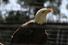 "<a href=""http://www.philadelphiazoo.org/zoo/Meet-Our-Animals/Birds/Birds-of-Prey/Bald-Eagle.htm"">http://www.philadelphiazoo.org/zoo/Meet-Our-Animals/Birds/Birds-of-Prey/Bald-Eagle.htm</a>"