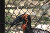 "<a href=""http://www.philadelphiazoo.org/zoo/Meet-Our-Animals/Birds/Penguins/Southern-ground-hornbill.htm"">http://www.philadelphiazoo.org/zoo/Meet-Our-Animals/Birds/Penguins/Southern-ground-hornbill.htm</a>"