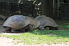 "<a href=""http://www.philadelphiazoo.org/zoo/Meet-Our-Animals/Reptiles/Turtles/Galapagos-Tortoise.htm"">http://www.philadelphiazoo.org/zoo/Meet-Our-Animals/Reptiles/Turtles/Galapagos-Tortoise.htm</a>"