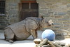 "<a href=""http://www.philadelphiazoo.org/zoo/Meet-Our-Animals/Mammals/Hoofed/Asian-Rhinoceros.htm"">http://www.philadelphiazoo.org/zoo/Meet-Our-Animals/Mammals/Hoofed/Asian-Rhinoceros.htm</a>"