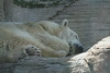 "<a href=""http://www.philadelphiazoo.org/zoo/Meet-Our-Animals/Mammals/Carnivores/Polar-Bear.htm"">http://www.philadelphiazoo.org/zoo/Meet-Our-Animals/Mammals/Carnivores/Polar-Bear.htm</a>"