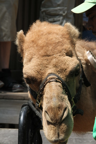 """<a href=""""http://www.philadelphiazoo.org/zoo/Rides-and-more/Camel-Safari.htm"""">http://www.philadelphiazoo.org/zoo/Rides-and-more/Camel-Safari.htm</a>"""