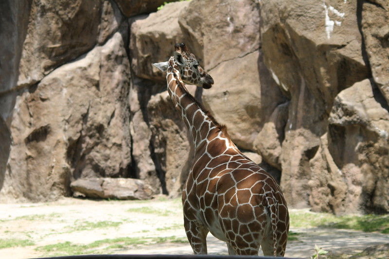 "<a href=""http://www.philadelphiazoo.org/zoo/Meet-Our-Animals/Mammals/Hoofed/Giraffe.htm"">http://www.philadelphiazoo.org/zoo/Meet-Our-Animals/Mammals/Hoofed/Giraffe.htm</a>"