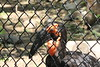 """<a href=""""http://www.philadelphiazoo.org/zoo/Meet-Our-Animals/Birds/Penguins/Southern-ground-hornbill.htm"""">http://www.philadelphiazoo.org/zoo/Meet-Our-Animals/Birds/Penguins/Southern-ground-hornbill.htm</a>"""