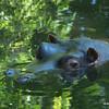 Heidi the Hippo 150mm