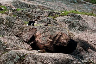 Zin-Zin, The Watchdog, vahtikoira aina tarkkana! :-) Rehndal, Kirkkonummi, 2012