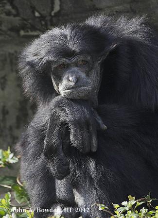 Riverbanks Zoo--Columbia, S.C. Feb. 2012