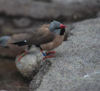 Birds-5851