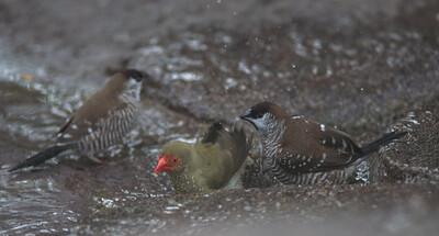 Birds-5836
