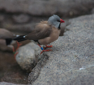 Birds-5852