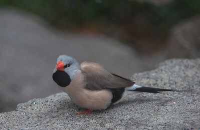 Birds-5846