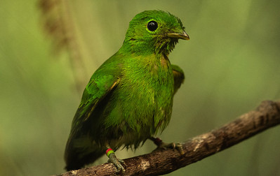 bird-6318