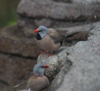 Birds-5850