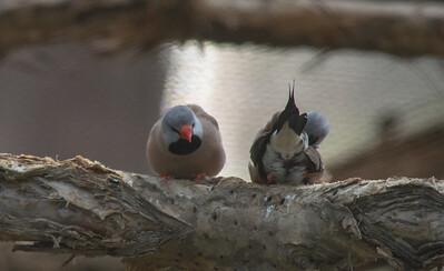 Birds-5841