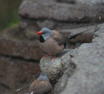 Birds-5849