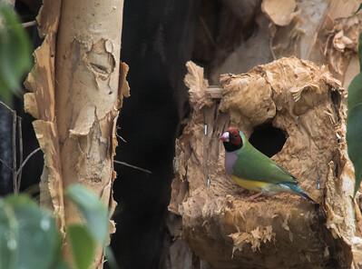 Birds-5867