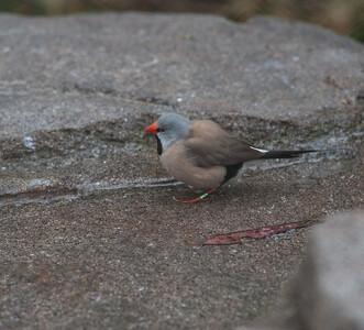 Birds-5857