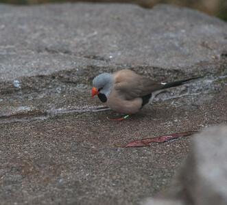 Birds-5856