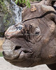 Gauhati, a Greater One-horned Rhinoceros