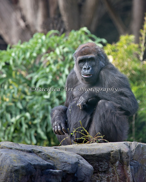 Monifa, having a snack on top of the big rock.