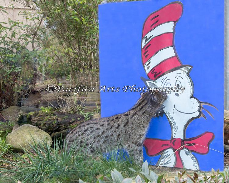 """Fishing Cat investigates """"Cat in the Hat"""""""