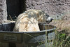 The perfect place to be on a hot day!  (Uulu, the Polar Bear)