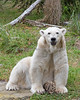 """Hey there Zoo Visitor!""  (Polar Bear, Uulu)"