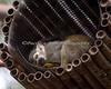 Squirrel Monkey in dreamyland