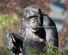 """Hey there!""  (Chimpanzee - Minnie)"
