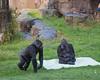 Kabibe and Bawang watch Zura walk by.