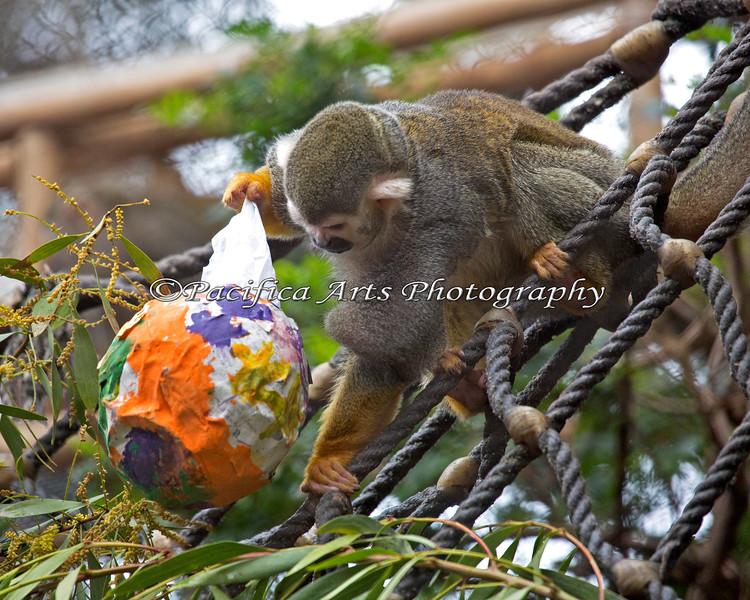 Monkey, Squirrel - Enrichment - Big Bunny's Spring Fling