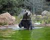 Kiona goes fishing! (Grizzly Bear)