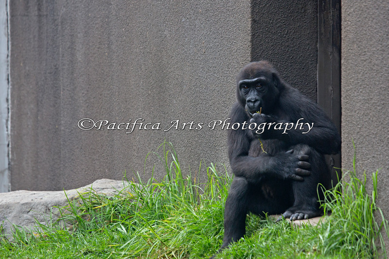 Hasani, 4 1/2 years, keeps watch from the doorway.