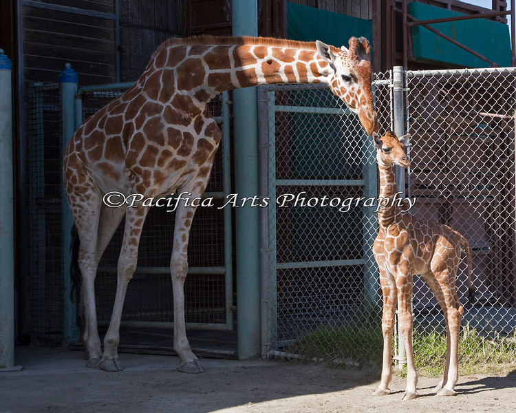 Doting mother, Kristin, and her week old daughter.
