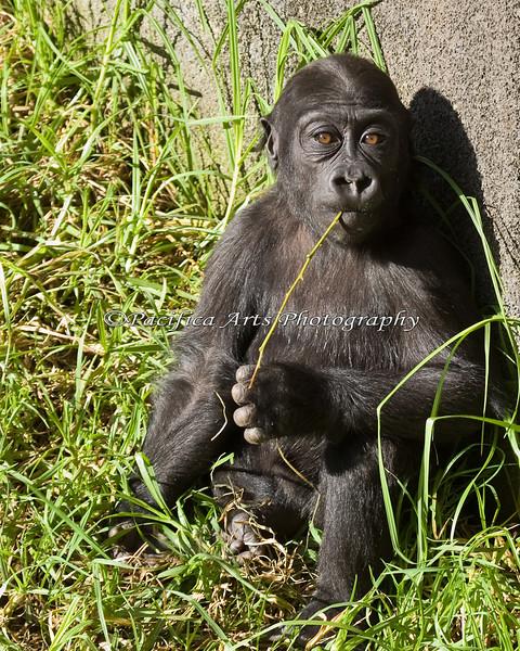 Hasani, enjoying a little sun after many days of rainy weather.